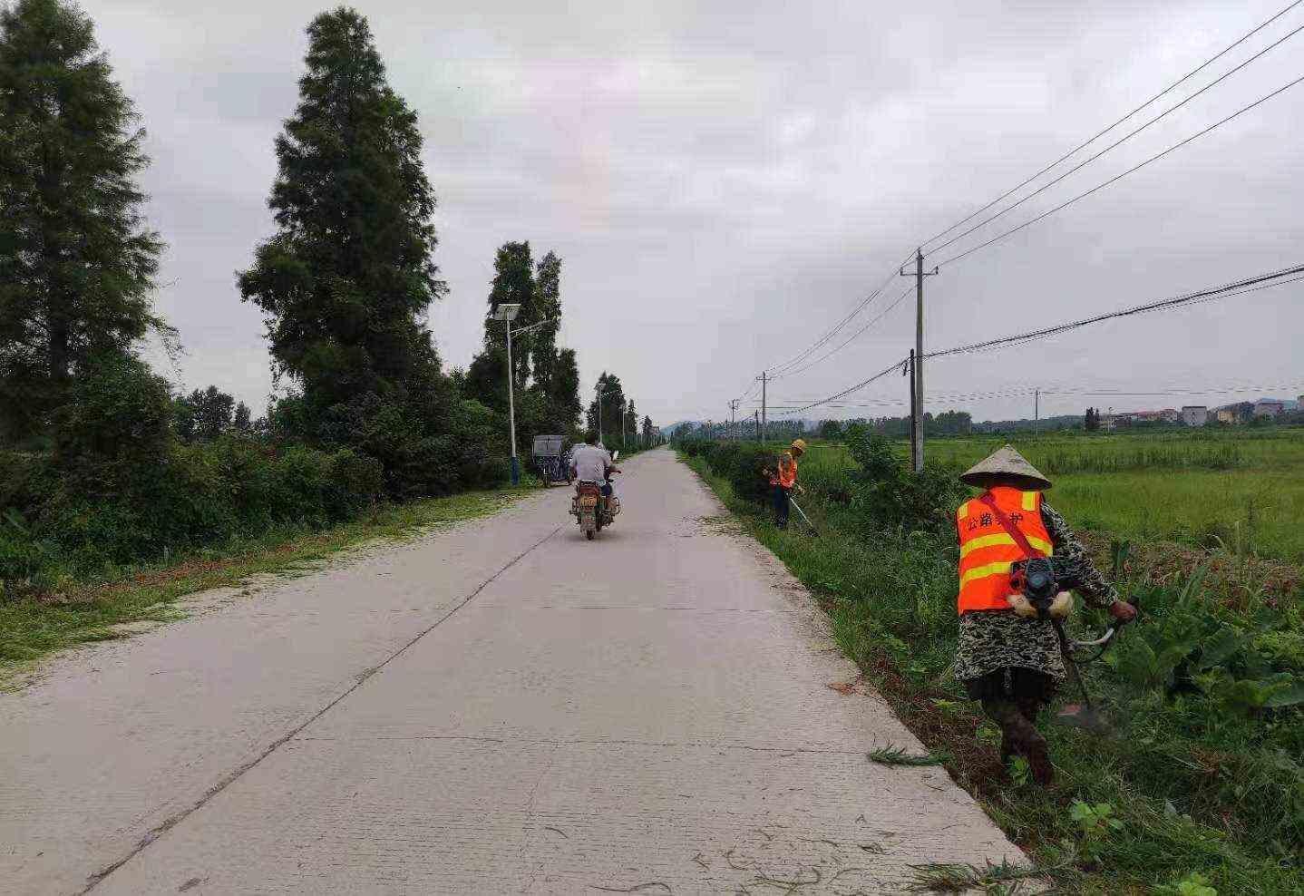 芦洲乡:清理道路两侧杂草 确保交通安全