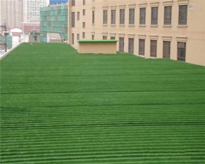 滁州马尼拉草坪