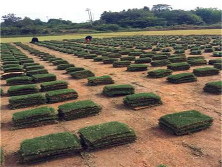 滁州百米大草坪