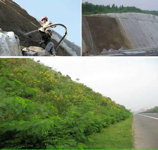 根据公路两侧的绿化用地铺设不同的边坡绿化带