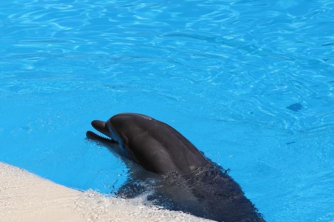 可爱小海豚图片