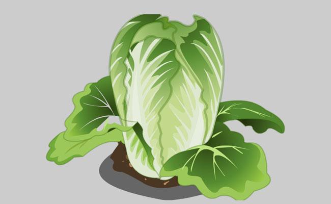 空心菜flash蔬菜动画图片