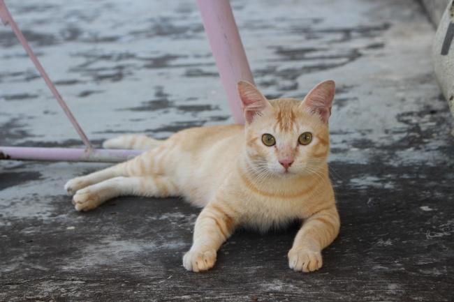 萌态可爱宠物猫图片