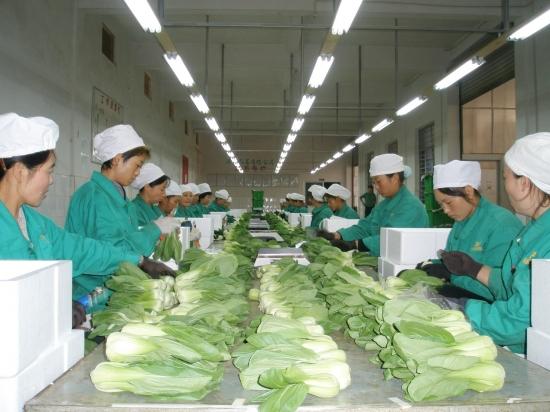 臭氧发生器在蔬菜加工中的应用介绍