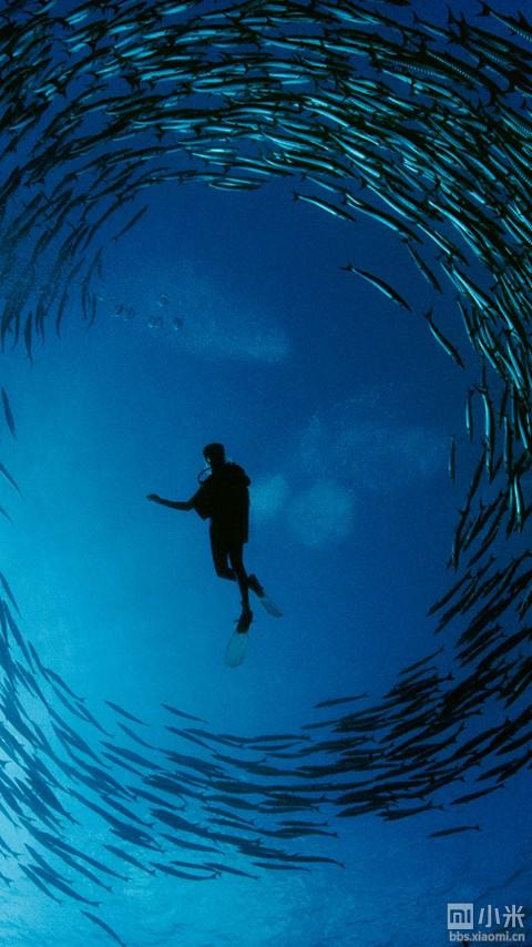 海底鱼群的图案壁纸