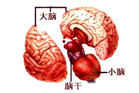 质子治疗脑干胶质瘤缩略图