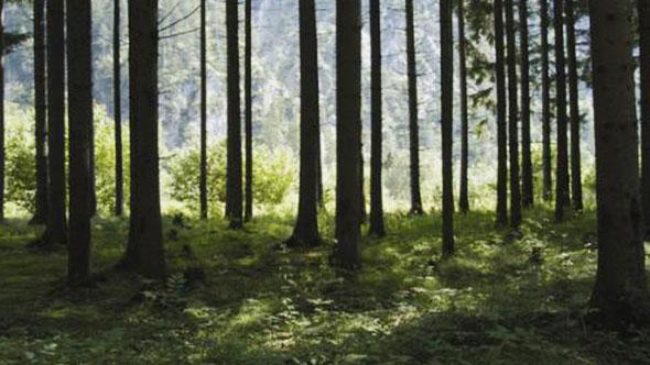 大自然原始森林瀑布水流鸟叫