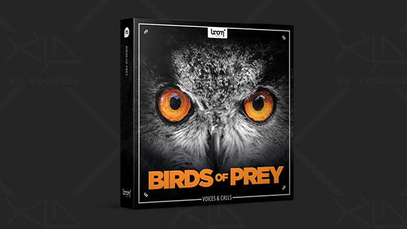 音效-猛禽猎鹰苍鹰雕猫头鹰及其他鸟类鸣叫